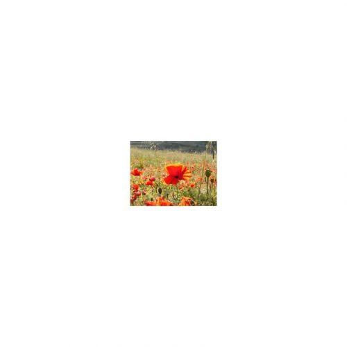 Amapola semillas 100 gr. Plameca